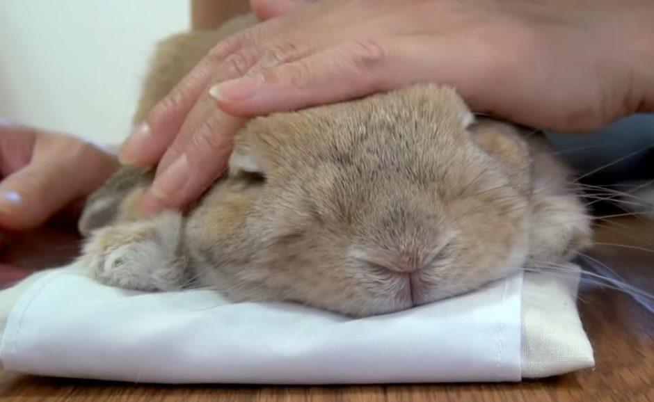 うさぎ 枕