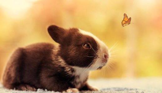 生まれたばかりのウサギの赤ちゃんの30日の成長記録に癒される...