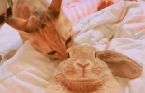猫に一生懸命毛づくろいされるウサギの姿に癒される・・・