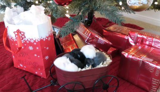 クリスマスツリーの元でスヤスヤ眠るうさぎの赤ちゃんにひたすら癒される…