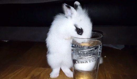 背伸びしてグラスから水を飲むウサギに世界中が悶絶