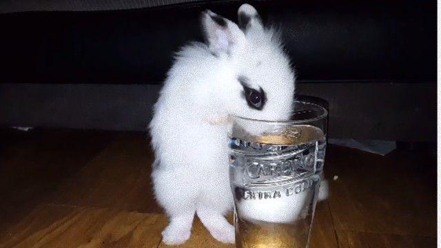 うさぎ 水飲み