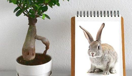 ウサギのDNAが強力な空気清浄機に!観葉植物で実験した結果が凄い。