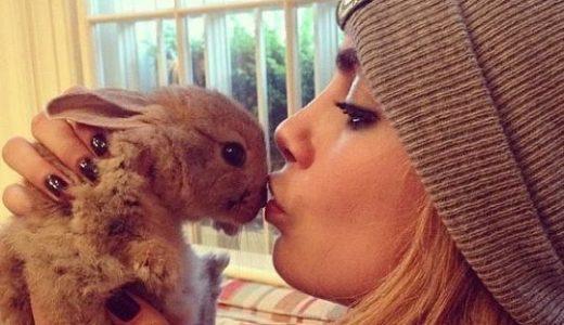 仕事場に専用スペース、お手伝い付きのセレブウサギ!飼い主はカーラ・デルヴィーニュ!