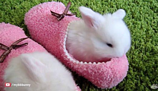 見るだけで癒される。ふわふわウサギの赤ちゃん達。