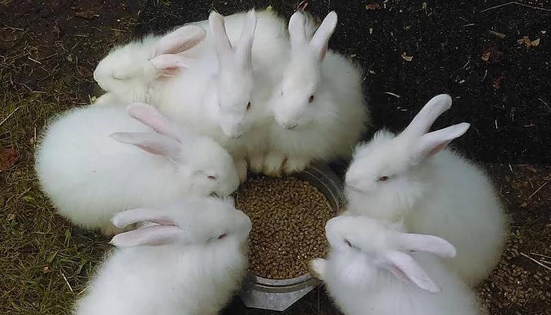 ウサギ島 ピースバニーアイランド