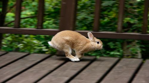 えっなんでっ?!簡単に脱走してしまうウサギ達!
